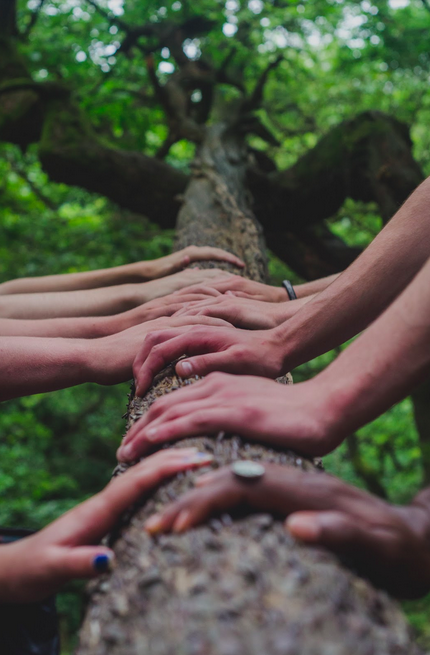 hands on a tree trunk